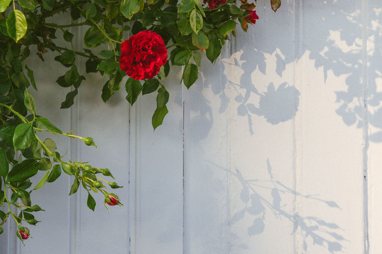 Red flowering plant against wall