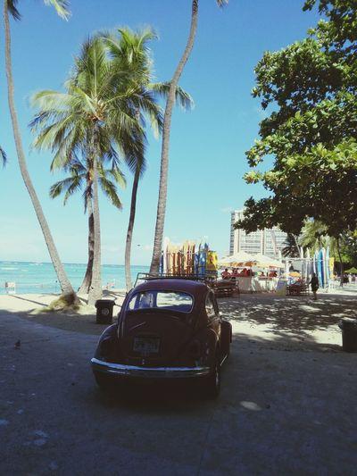 Palm Tree Tree Beach Day Sea Outdoors Blue No People Sky Clear Sky Water Nature City Car Hawaii Hawaii Life VW Beetle Red