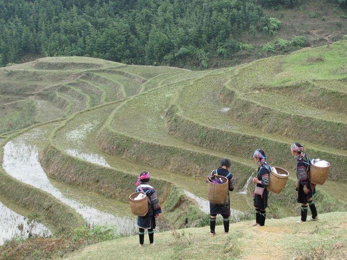 Natural Beauty Sapa Sapa, Vietnam Travel Photography Vietnam Wanderlust Adventure Ricepaddies