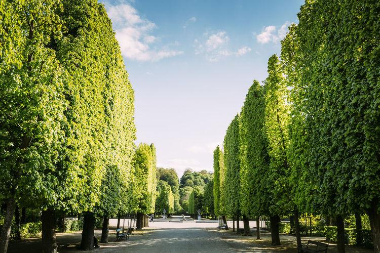 Golden garten trees