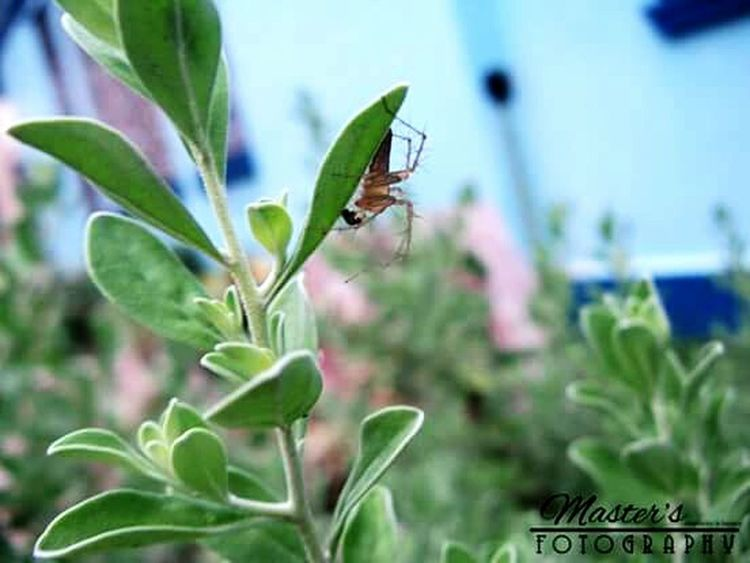 My photograph: Bug's life🐜 Green Insect Photography Mastersphotog