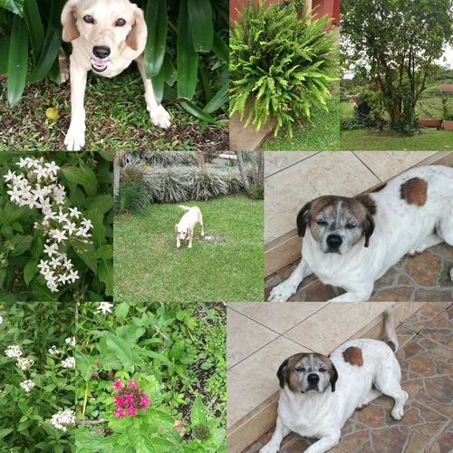 Enyoing Nature and pets