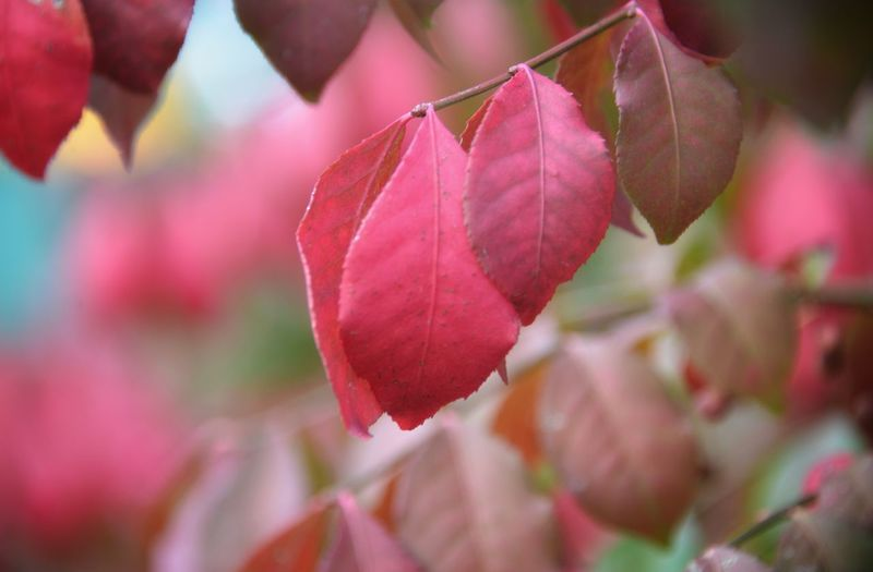 Close-up of pink leaves on plant during autumn