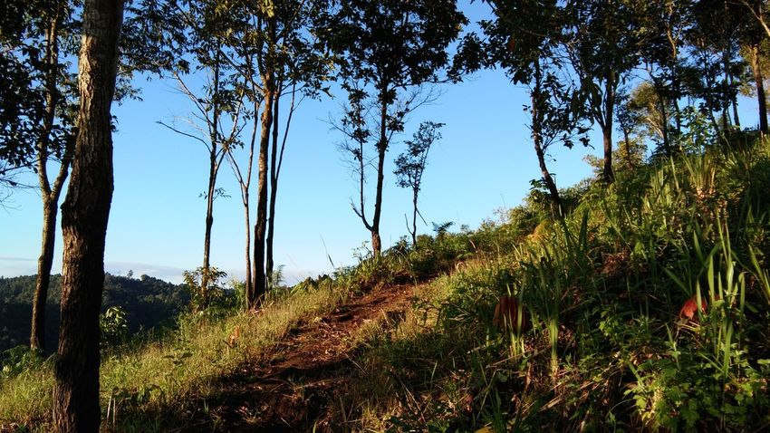 Beauty In Nature Landscape Mountain Day Nature Thailand🇹🇭 Mae Salong Chiang Rai, Thailand Outdoors Trail Running MST2017