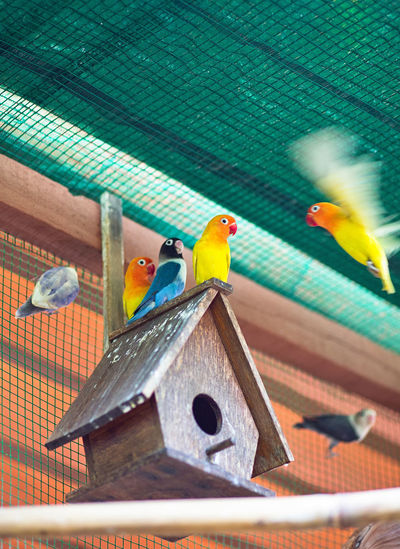 Low angle view of parrots perching on birdhouse