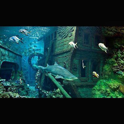 ТРЦРио ОкеанариумВРио МореВЦентреГорода рыбки РыбкиТропические Архив2015ОК_ Океанариум Oceanarium TropicalFish FishTank TrcRio Fishes Fish ЭтоБылоКруто КрасотенскаяКрасота Красота ШикарныйОкеанариум SquareInstaPic