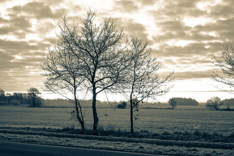 Frosty winter morning in Ostfriesland Sky Nature No People Landscape Tree Cloud - Sky Beauty In Nature Tranquility Scenics - Nature Tranquil Scene Non-urban Scene Outdoors Sundawn Field Land Road Plant Bare Tree