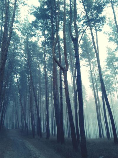 Tree Forest Nature Beauty In Nature Outdoors Tree Trunk WoodLand