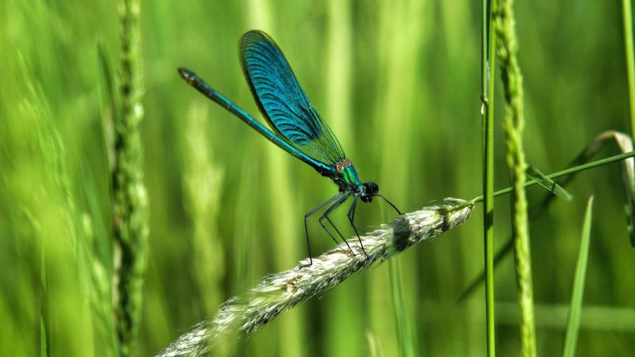 EmNewHere Colors Salzgitter Niedersachsen Libelle Animal Themes Animal Wildlife Animal Invertebrate One Animal Animals In The Wild Insect Animals In The Wild Grass Nature Day Green Color Beauty In Nature
