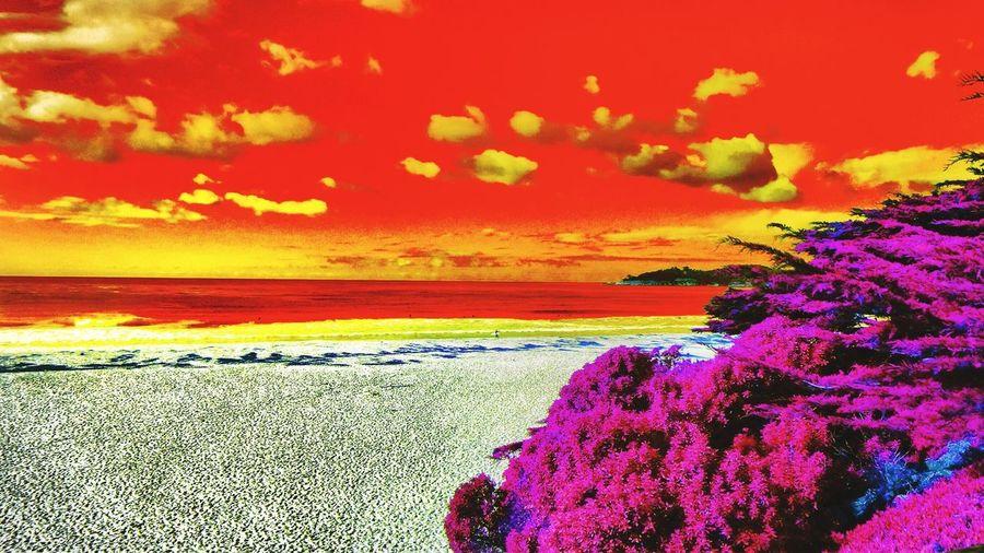 Carmel CA🇺🇸 Landscape_Collection EyeEm Landscape_photography All_shots #Portrait #Vscocamphotos #Likesforlikes #Photographs #Photographylovers #TopLikeTags #Outdoorphotography #Likesreturned #Silhouette #Likeforlike #Art #Contrast #Landscaped #TagStaGram #love #friends #tagstagram #photooftheday #selfie #amazing #f The Adventure Handbook Usa #igersusa #ig_unitedstates #rockin_shotz #just_unitedstates #insta_crew #gf_usa #nature #rsa_rural #instagramhub #allshots_#world_shooters #insta_america #ig_captures #centralfeed #webstagram #ic_landscapes #wonderful_america #storyofamerica #instagra Nature Sunset #sun #clouds #skylovers #sky #nature #beautifulinnature #naturalbeauty #photography #landscape Hdr_Collection EyeEm Gallery