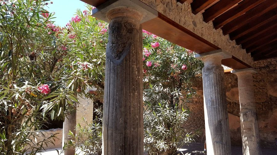 Pompeii  Pompéi Pompei Scavi Architectural Column Architecture Low Angle View No People Outdoors Tree Flower Nature Sunny Day Italia Italy Travel Destination Catherine2017 See The Light The Architect - 2018 EyeEm Awards The Traveler - 2018 EyeEm Awards