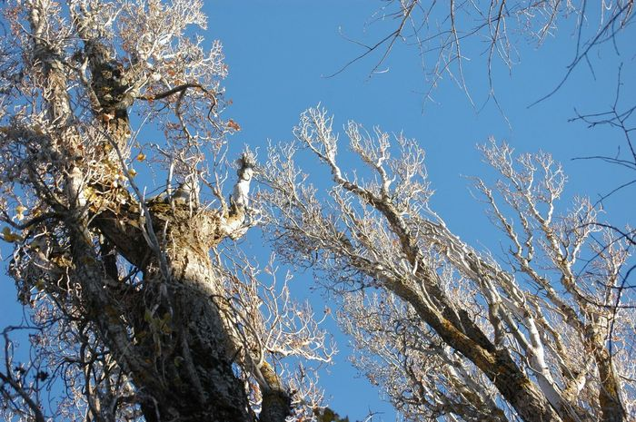 Blue Sky Light And Shadow Nature Poplars Tree Winter Sun