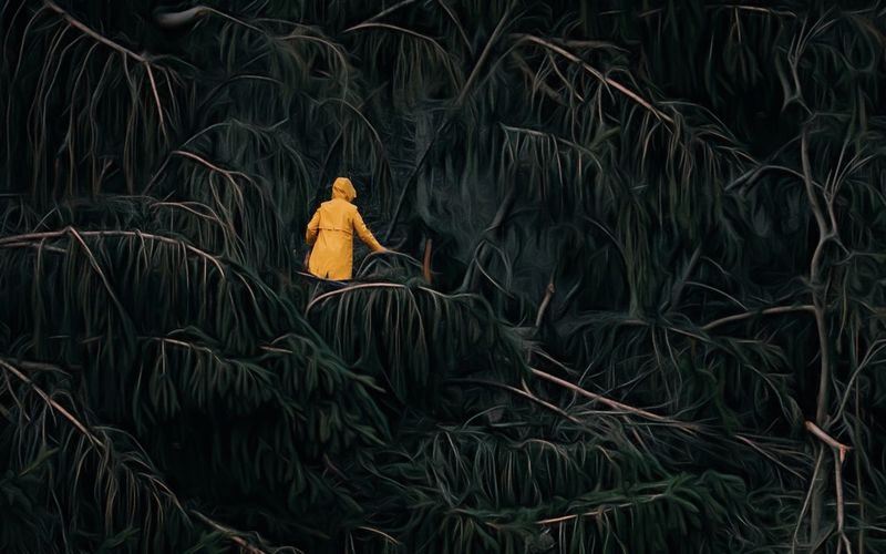 Rear View Of Woman Walking Amidst Plants In Forest At Night