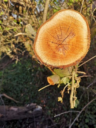 Close-up Plant Tree Ring Tree Stump Deforestation Axe Lumber Industry Firewood Log Timber Prickly Pear Cactus Mushroom Ant Fungus Pile Woodpile Toadstool Insect Growing Dragonfly
