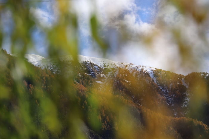autumn in Switzerland Autumn Autumn colors Autumn Leaves Autumn Mood Mountain Trees Tree Leaves Leaves🌿 Switzerland Switzerland Alps Eyeemnaturelover EyeEm Nature Lover Conifer  Evergreen Tree Beauty In Nature Tree Defocused Close-up Sky Pine Woodland Fall Change Autumn Collection