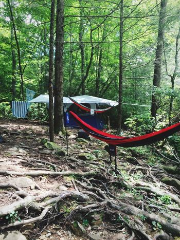 Jacks River Camping Hammock Forest Great Outdoors Tent