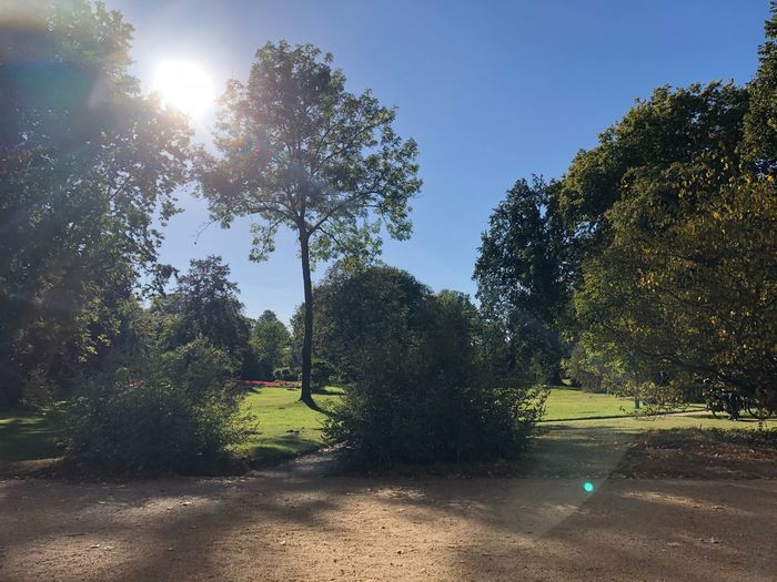Autumn Park Sanssouci IPhone X IPhone X Photography Germany Potsdam Tree Plant Sunlight Sky Nature Growth Tranquility Day Sunbeam No People Outdoors Beauty In Nature Tranquil Scene Lens Flare Sun Park - Man Made Space Park Sunny Grass Land