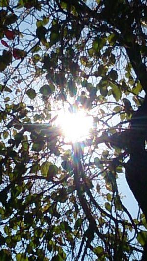 Tree Branch Flower Leaf Sunlight Clear Sky Sun Lens Flare Sunbeam Brightly Lit Blossom Plant Life Sunshine