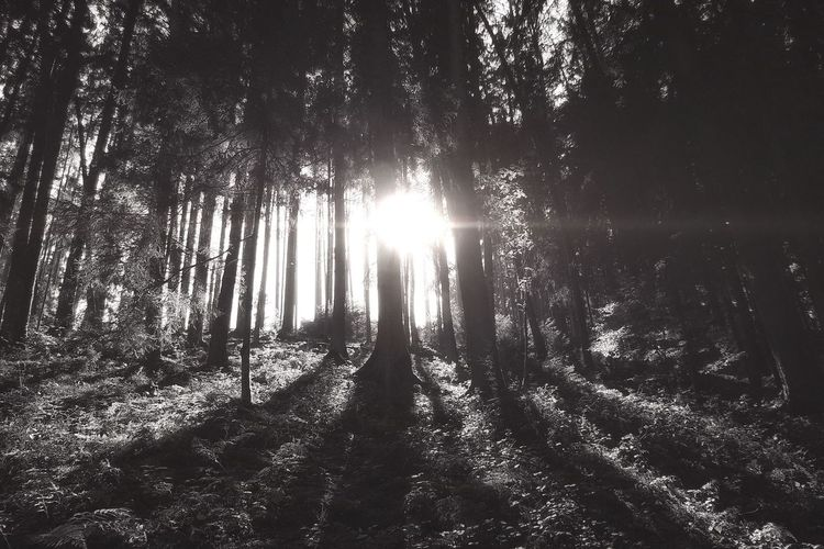 P h o n e H o m e 🐽 Tree Sunbeam Nature Forest Tranquility Sunlight B&w Black & White Sun Beauty In Nature Blackandwhite Photography Monochrome Scenics Monochrome Photography Tranquil Scene Streaming Sunrays Shootermag Atmospheric Mood Sunset_collection Tadaa Community Tadaa Friends Melancholic Landscapes Nature Photography Woods Welcome To Black The Great Outdoors Perspectives On Nature