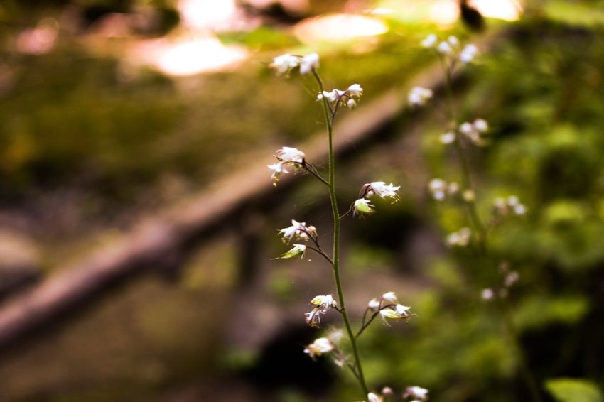 Fragile Flowering Plant Flower Plant Fragility Freshness Vulnerability  Beauty In Nature Nature Day Flower Head Growth