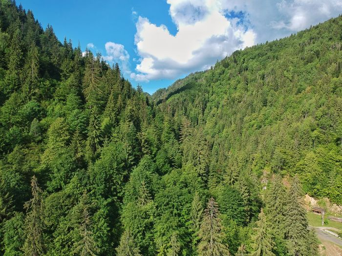 Drone  Drone Photography Forest Photography Forest Romania Transylvania Plant Green Color Growth Sky Cloud - Sky Nature Beauty In Nature Day Outdoors Tranquility No People Field Tree Land Agriculture Sunlight Tranquil Scene Low Angle View Foliage Scenics - Nature Tree Beauty In Nature Green Color Mountain