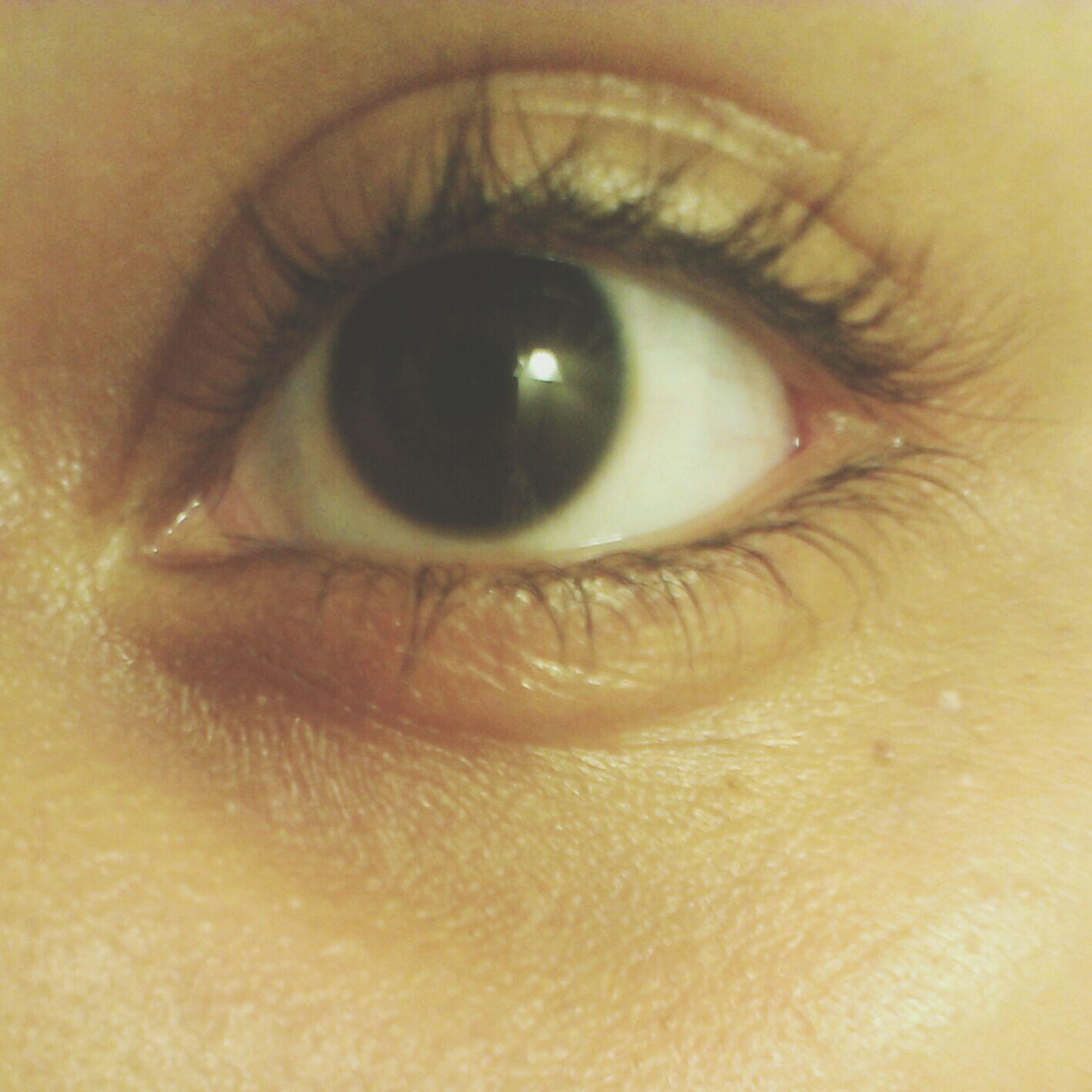 human eye, eyelash, close-up, eyesight, part of, sensory perception, human skin, looking at camera, portrait, human face, extreme close-up, iris - eye, eyeball, lifestyles, indoors, extreme close up, unrecognizable person