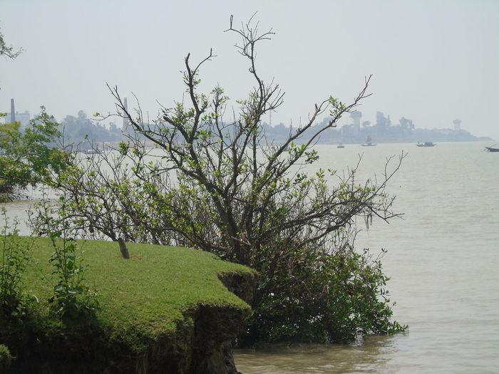 Water Tree Sea