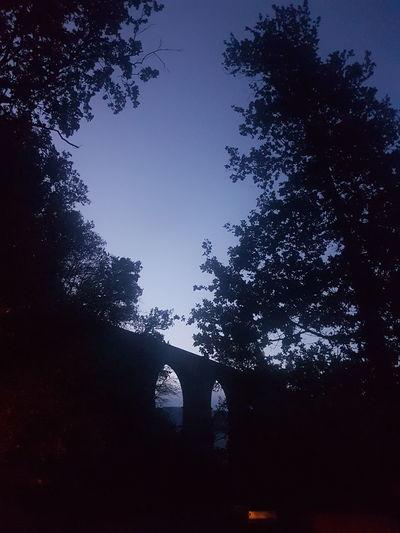 Night Silhouette Tree No People Outdoors