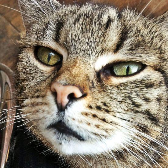 Catoftheday Cat
