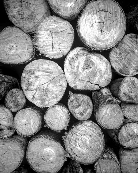 Wood Firewood