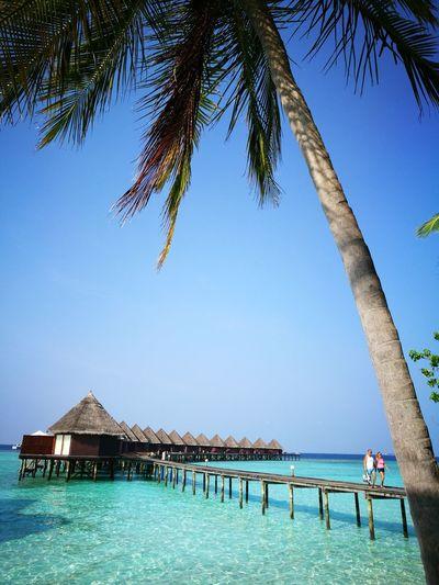 Blue is always my favourite colour... crystal clear Blue Sky Maldives Island Coconut Trees Summer Blue Beach Ocean Holiday Male Thulhagiri Stilt House Calm