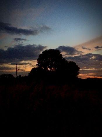 Tree Sun Set Sillouette Dark Orange Lost