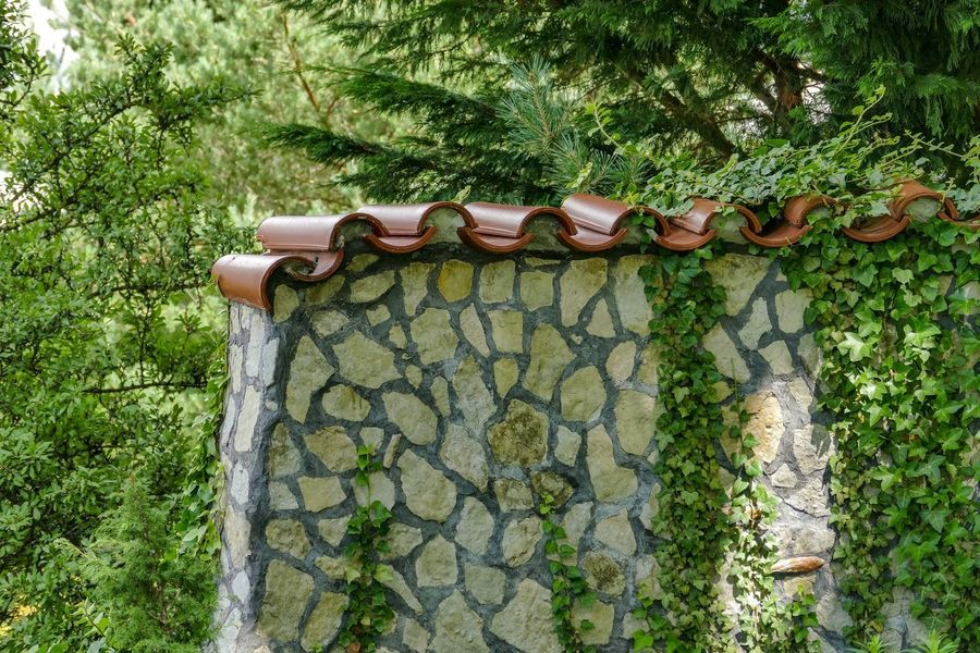 Mauer Naturstein Architecture Building Exterior Built Structure Close-up Day Efeu An Mauer Growth Hanging Ivy Nature Naturnah No People Outdoors Plant Tree