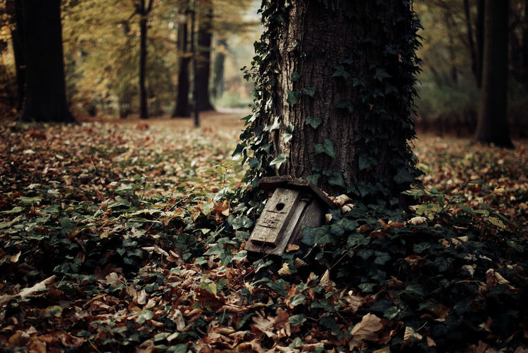 Abandoned birdhouse by tree trunk on field
