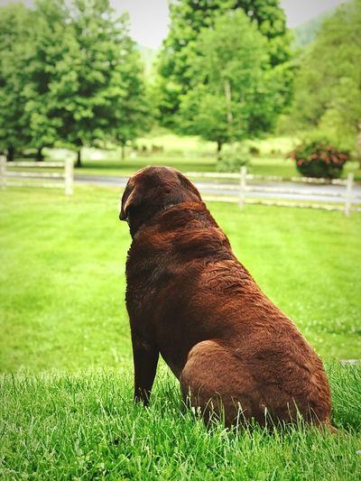 Take me there MaryPuppinsPetSitting Wherethegreengrassgrows Chocolatelab Dogs North Carolina Boone Small Business Heroes EyeEmNewHere