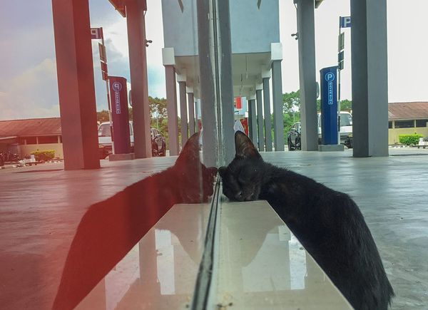Cat is sleeping on the street Reflection Funny The Street Photographer - 2018 EyeEm Awards The Creative - 2018 EyeEm Awards Creative Space EyeEmNewHere Pets One Animal Glass - Material No People Animal Animal Themes Window Day Domestic Cat Nature Outdoors EyeEmNewHere