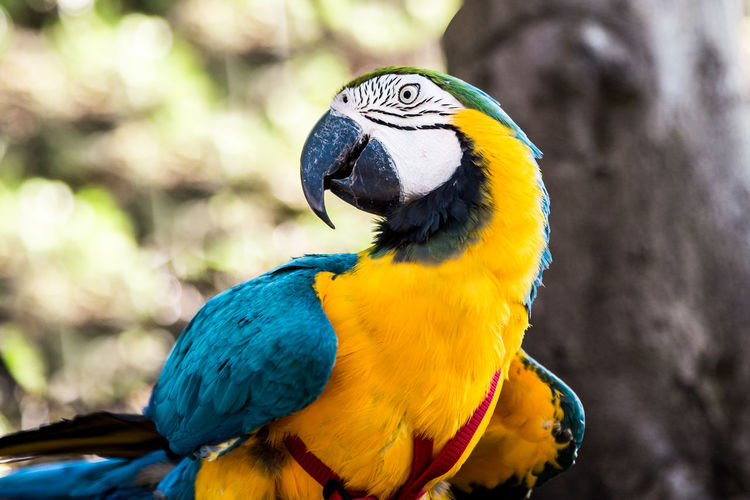 Parrots Animal Love Colours Love Animal Animal Themes Animal Wildlife Animals In The Wild Ara Beak Beauty In Nature Bird Close-up Color Day Focus On Foreground Gold And Blue Macaw Kisses Macaw Macaw Parrot Macaws Nature No People Parrot Parrots Vertebrate