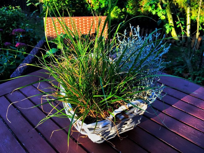 Plants on the table Plant Growth Nature No People Day Sunlight High Angle View