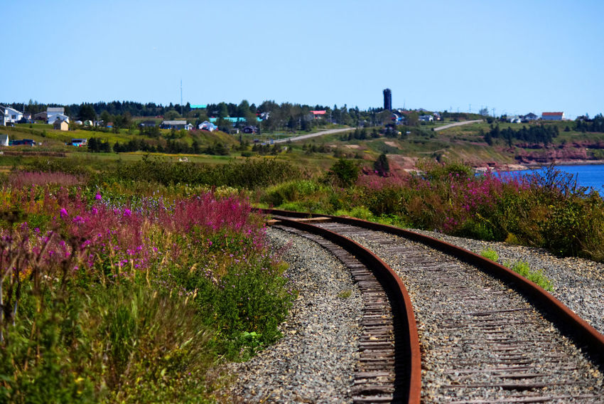 Railroad tracks passing near the water and in the middle of field of flowers Railroad Track Beauty In Nature Clear Sky Day Flower Landscape Nature No People Outdoors Plant Railroad Tracks Scenics Sky Tracks Trains Tree
