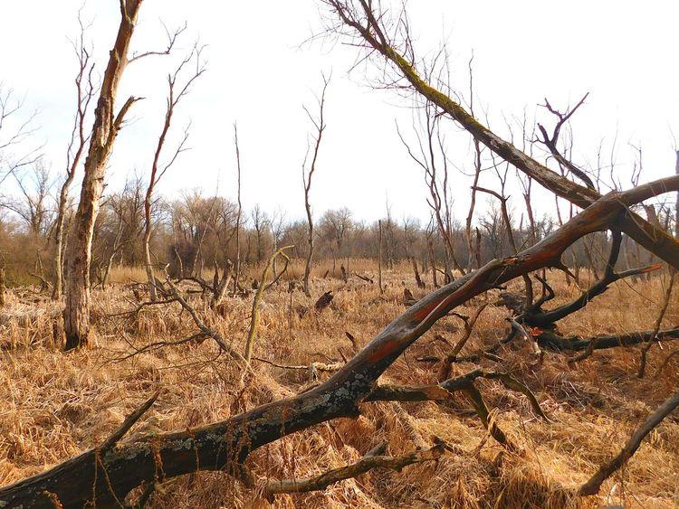 Broken Chaos Trees Wild Nature