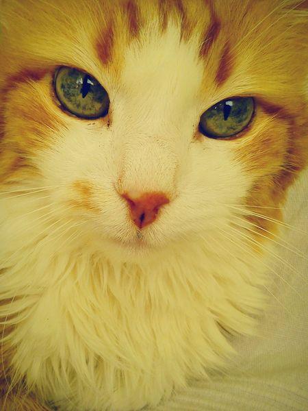 16 yıl sonra.... Kedi Aşkı Kedi Kediseverler Kedim  Kedi Gibi Kedisi Cats Of EyeEm Catcat Catcatcat🐱🐈 Cat Lovers Cat Eyes Catch The Moment Mycat♥