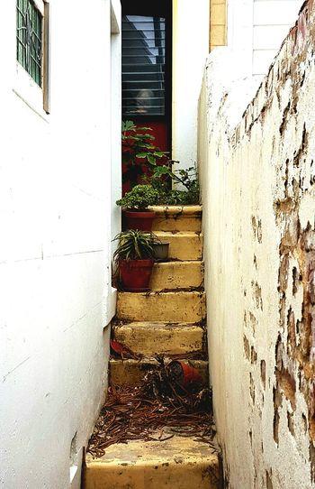 Little Lane Lane Stairs Rustic Plants