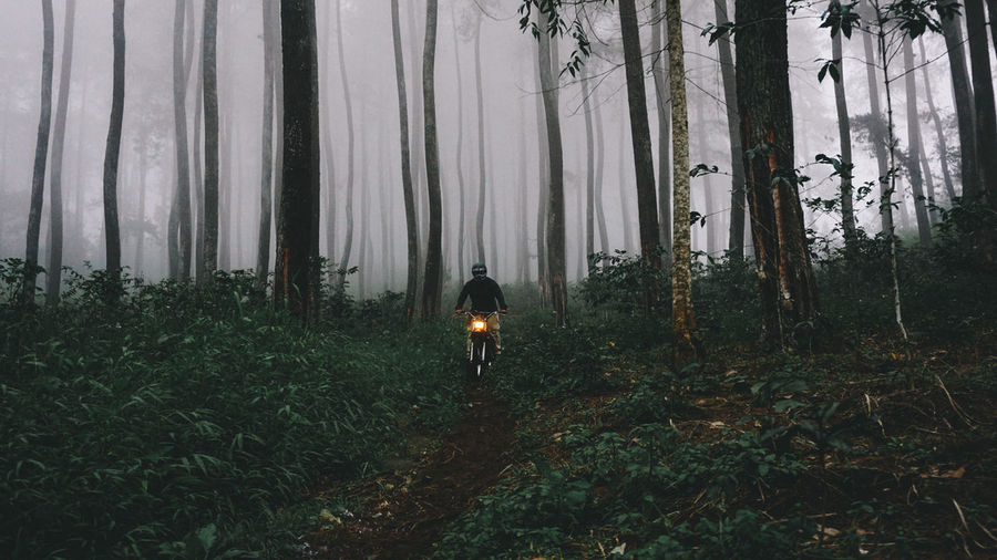 Man Riding Motorcycle Amidst Trees In Forest During Foggy Weather