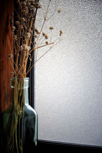 Home Decor Home Home Showcase Interior Home Showcase Interior Plant Wall - Building Feature No People Growth Glass - Material Vase Flower Decoration Flowering Plant Window Potted Plant Flower Arrangement The Still Life Photographer - 2018 EyeEm Awards The Still Life Photographer - 2018 EyeEm Awards