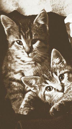 Kitten Twins Beauty In Nature Animals