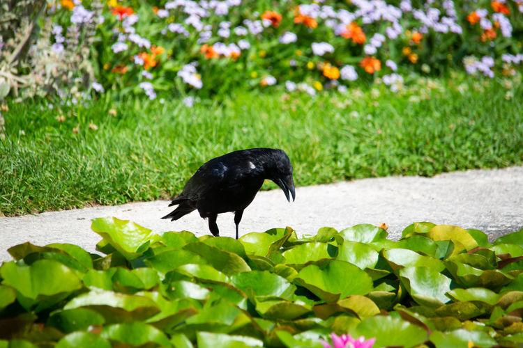 Black bird on a flower