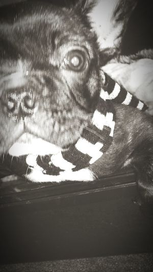 My little doggy Nala. √ Cheese!