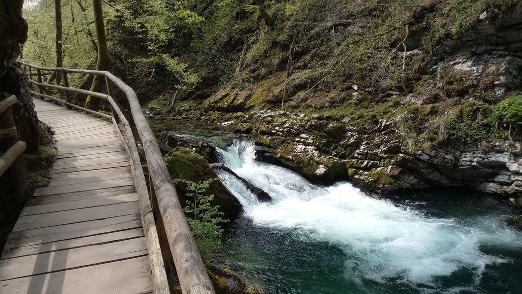 Water Outdoors No People Forest soteska vintgar Vintgar Klamm Wildbach