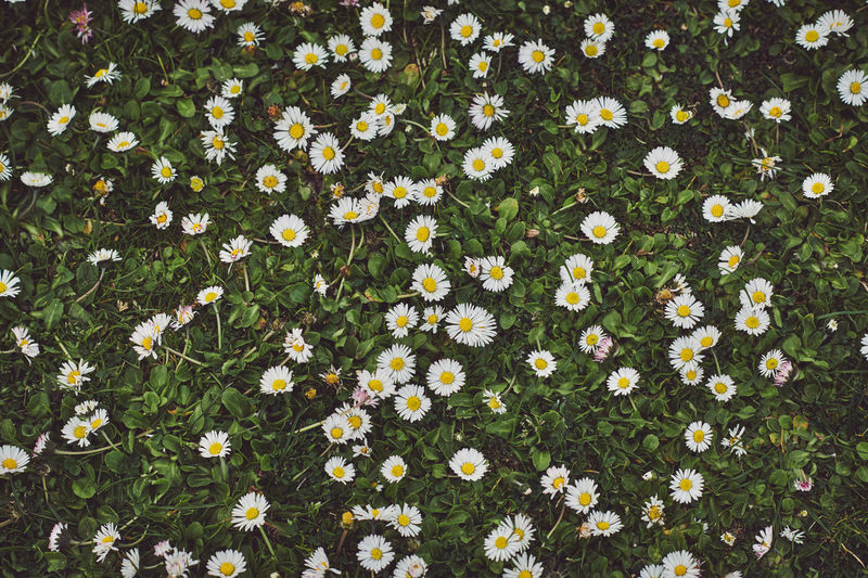 Spring in Kew Spring Springtime Spring Flowers spring into spring Spring Has Arrived Flower Flowering Plant Beauty In Nature Vulnerability  Freshness Fragility Plant High Angle View Nature Growth Day Daisy Green Color No People Backgrounds Yellow Full Frame Flower Head Inflorescence Flowerbed