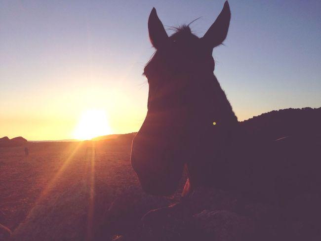 El atardecer de los caballos Natural Paisaje Sunset Menorca Sant Tomas Horses Atardecer Menorquin